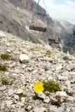 Подвесной подъемник и желтый цветок Стоковые Изображения RF
