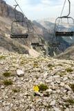 Подвесной подъемник и желтый цветок Стоковое Фото