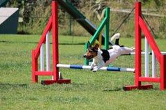Подвижность собаки Стоковое фото RF