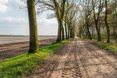 По-видимому бесконечная грязная улица с следами автошины и строками деревьев o Стоковое фото RF