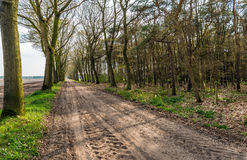 По-видимому бесконечная грязная улица с следами автошины и строками деревьев o Стоковое Изображение RF