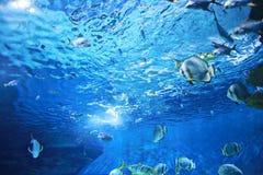 Подводная картина конструкции Стоковая Фотография