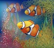 Подводная карточка с clownfish Стоковое Изображение