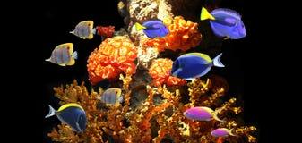 Подводная сцена с тропическими рыбами Стоковые Фото