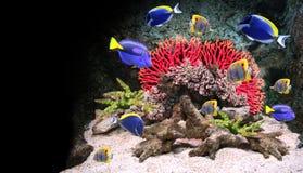 Подводная сцена с тропическими рыбами Стоковые Изображения