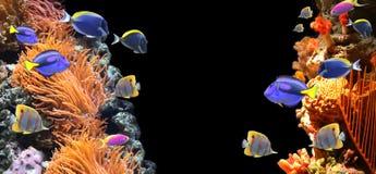Подводная сцена с тропическими рыбами Стоковое Изображение RF