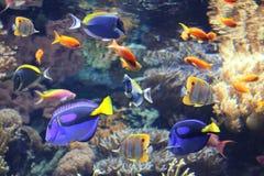 Подводная сцена с тропическими рыбами Стоковая Фотография RF