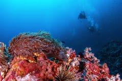 Подводное Similan, северное море Andaman Стоковые Изображения