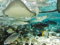 Подводные акулы и рыбы тварей моря в Таити Стоковые Фото
