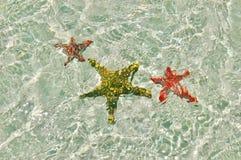 Подводные морские звёзды цвета Стоковая Фотография
