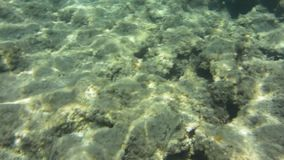 Подводные текстура и фауна в Ionian море, Закинфе, Греции сток-видео