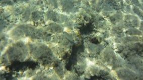 Подводные текстура и фауна в Ionian море, Закинфе, Греции видеоматериал