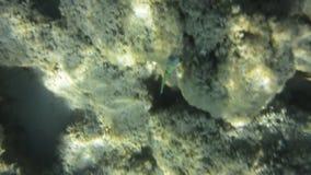 Подводные текстура и фауна в Ionian море, Закинфе, Греции акции видеоматериалы