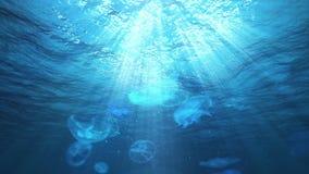 Подводные лучи Солнця в океане и медузы (петля) видеоматериал