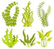 Подводные элементы вектора морской водоросли бесплатная иллюстрация