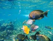 Подводный ландшафт с разнообразными рыбами коралла Стоковое Изображение