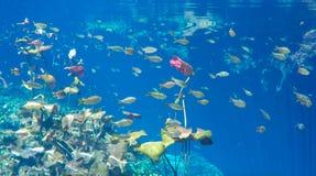 Подводный взгляд в пруде стоковая фотография rf