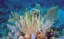 Подводный коралловый риф Стоковое фото RF