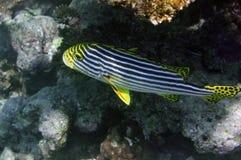 Подводный мир Мальдивы Стоковое Изображение