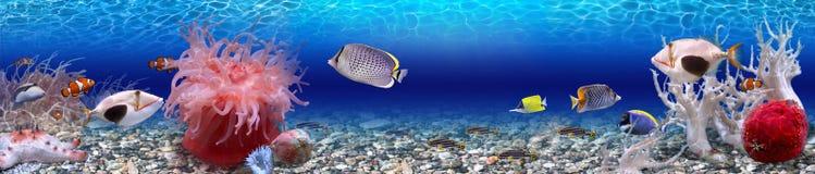 Подводный мир - панорама Стоковое Изображение