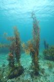 Подводный пейзаж в воздержательном море Стоковые Фото