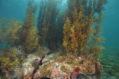 Подводный пейзаж в воздержательном море Стоковое фото RF