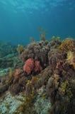 Подводный пейзаж в воздержательном море Стоковая Фотография RF