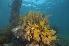 Подводный пейзаж в воздержательном море Стоковое Изображение