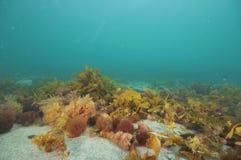 Подводный пейзаж в воздержательном море Стоковая Фотография