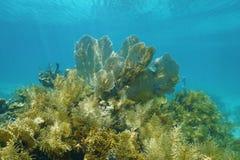 Подводный пейзаж в коралловом рифе с gorgonian Стоковое Фото