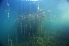 Подводный пейзаж в реке Стоковые Изображения