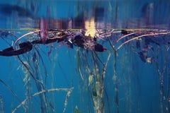 Подводный пейзаж в реке Стоковое Фото
