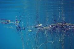 Подводный пейзаж Стоковые Фото