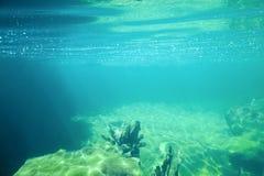 Подводный пейзаж Стоковые Изображения RF