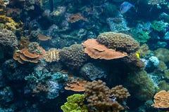 Подводный риф с экзотической вегетацией и Sealife Стоковая Фотография