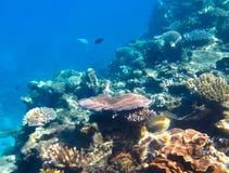 Подводный сад коралла Стоковая Фотография