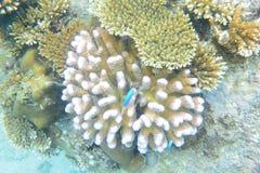 Подводный сад Стоковое Изображение