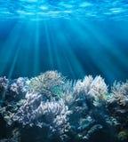 Подводный Стоковые Фотографии RF