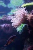 Под водой Стоковые Фотографии RF