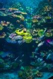 под водой Стоковые Изображения RF