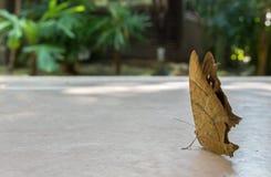 Подготавливайте для того чтобы начать концепцию, заднюю часть бабочки в форме лист под тенью большого дерева в парке Стоковая Фотография RF