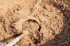 Подготавливать массовый для естественных гипсолитов глины Стоковые Изображения