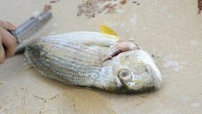 подготовлять рыб свежий акции видеоматериалы