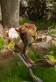 Полевой цветок Кипра в зоне замка St Hilarion стоковые изображения