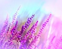 Полевой цветок (фиолетовый цветок луга) Стоковое Изображение RF