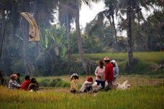 Полевые рабочие риса Стоковые Фотографии RF