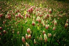Полевые цветки весной Стоковые Изображения RF