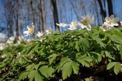 Полевые цветки весны Стоковые Фото