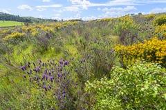 Полевые цветки в Алгарве Португалии Стоковые Изображения