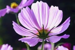 Полевые цветки в утре Стоковые Фото